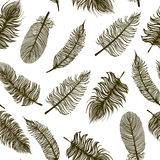 Seamless pattern with sketch feathers Royalty Free Stock Images