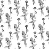 Seamless pattern with sketch Zinnia flowers, floral decor black and white. Illustration. Seamless pattern with sketch Zinnia flowers, floral decor black and royalty free illustration