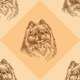 Seamless pattern with small Pomeranian on orange background Royalty Free Stock Photos