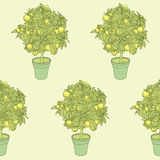 Seamless pattern of small tangerine tree in a pot in contour sty Royalty Free Stock Photos