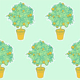 Seamless pattern of small tangerine tree in a pot Royalty Free Stock Photo