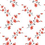 Seamless pattern small wild red cherry plum flowers on the white background. Ornament. Watercolor -A royalty free illustration
