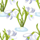 Seamless pattern snowdrop flower blossomed with leaves. Vector i Stock Images