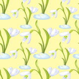 Seamless pattern snowdrop flower blossomed with leaves. Vector i Stock Photography