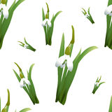 Seamless pattern with snowdrops flowers with green stems and leaves different sizes. White background. Vector illustration Royalty Free Stock Photography