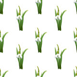 Seamless pattern with snowdrops flowers with green stems and leaves same sizes. White background. Vector illustration Stock Photos