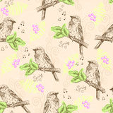 Seamless pattern with sparrows Stock Image