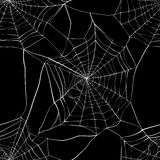 Seamless pattern with spider web Stock Image
