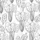 Seamless pattern with spinach Royalty Free Stock Images