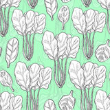 Seamless pattern with spinach Stock Photos