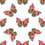 Seamless pattern of spotted beautiful watercolor butterflies. Stock Image
