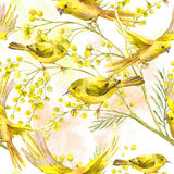 Seamless Pattern with Sprig of Mimosa, Yellow Bird. Seamless Spring Pattern with Watercolor Sprig of Mimosa and Yellow Bird Royalty Free Stock Images