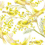 Seamless Pattern with Sprig of Mimosa, Yellow Bird. Seamless Spring Pattern with Watercolor Sprig of Mimosa and Yellow Bird Royalty Free Stock Image
