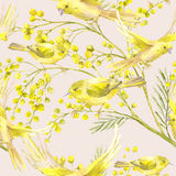Seamless Pattern with Sprig of Mimosa, Yellow Bird. Seamless Spring Pattern with Watercolor Sprig of Mimosa and Yellow Bird Stock Image