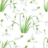 Seamless pattern of spring flower. The first snowdrops Galanthus. Flowers for decoration. Vector illustration isolated on white ba. Ckground. Web site page and Royalty Free Stock Image