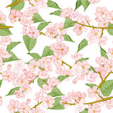 Seamless pattern with spring flowers. Apple and cherry blossom Stock Image