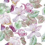 Seamless pattern with spring flowers.  Clematis. Tulip.  Iris. Watercolor. Stock Image