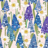 Seamless pattern with spring flowers. Hyacinth Stock Images
