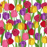 Seamless pattern with spring flowers. Tulips Stock Photo
