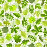 Seamless pattern from spring leaves. Stock Image