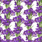 Seamless pattern from spring purple crocuses Stock Photo