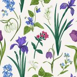 Seamless pattern with flowers and herbs. Seamless pattern with spring and summer flowers and herbs. Botanical illustration. Vintage vector backgrod royalty free illustration