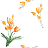 Seamless pattern of spring tulips with orange flowers on a white background. Watercolor Royalty Free Stock Images