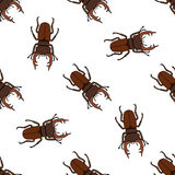 Seamless pattern with stag-beetle. Lucanus cervus. hand-drawn . Vector Royalty Free Stock Photography