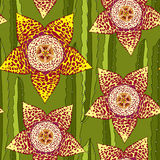 Seamless pattern with Stapelia. Genus of low-growing stem succulent plants. Series of different succulents Stock Photography