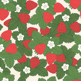 Seamless pattern with strawberries. Seamless pattern of strawberries with leaves and flowers - vector  illustration Stock Image