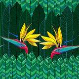 Seamless pattern with Strelitzia reginae or bird of paradise flower and green leaves Royalty Free Stock Photography