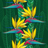 Seamless pattern with Strelitzia reginae or bird of paradise flower and ornate leaves on the dark green background Stock Photography