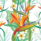 Seamless pattern with Strelitzia on white Royalty Free Stock Image