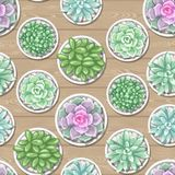 Seamless pattern with succulents. Echeveria, Jade Plant and Donkey Tails.  Stock Photo