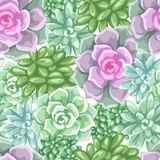 Seamless pattern with succulents. Echeveria, Jade Plant and Donkey Tails.  Stock Image