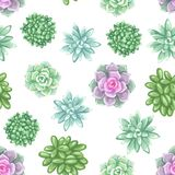 Seamless pattern with succulents. Echeveria, Jade Plant and Donkey Tails.  Royalty Free Stock Photography