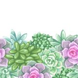 Seamless pattern with succulents. Echeveria, Jade Plant and Donkey Tails.  Stock Images