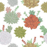 Seamless pattern with succulents set. Collection decorative floral design elements for wedding invitations and birthday cards. Royalty Free Stock Photography