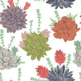 Seamless pattern with succulents set. Collection decorative floral design elements Stock Photos
