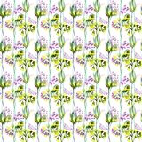 Seamless pattern with Summer flowers. Watercolor illustration Royalty Free Stock Photos