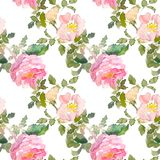 Seamless pattern of summer garden yellow and pink rose flower. Watercolor floral illustration. Botanical decorative. Continuous gentle blooming plant pattern royalty free illustration