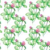 Seamless pattern Summer meadow flowers , clover flowers. Seamless pattern of clover. Flowers background, watercolor Stock Photography
