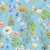 Seamless pattern of summer wildflowers. Seamless pattern of beautiful summer wildflowers stock photos