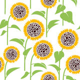 Seamless pattern, sunflower Stock Images