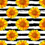 Seamless pattern with sunflowers on black and white stripes back royalty free illustration