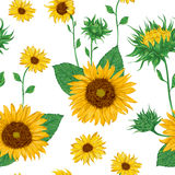 Seamless pattern with sunflowers. Collection decorative floral design elements. Royalty Free Stock Image