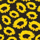 Seamless pattern of sunflowers. Seamless pattern with sunflowers on dark background with fabric texture. Vector eps 10 Royalty Free Stock Image