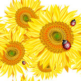 Seamless pattern with sunflowers and ladybug Royalty Free Stock Images
