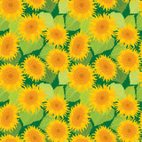 Seamless pattern with sunflowers. Summer season, nature background. vector illustration