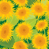 Seamless pattern with sunflowers. Summer season. Nature background Royalty Free Stock Image